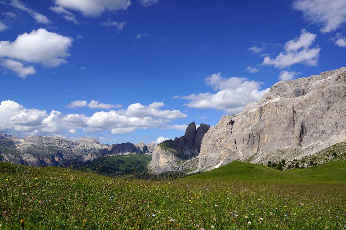 Flower meadow on the Passo Sella