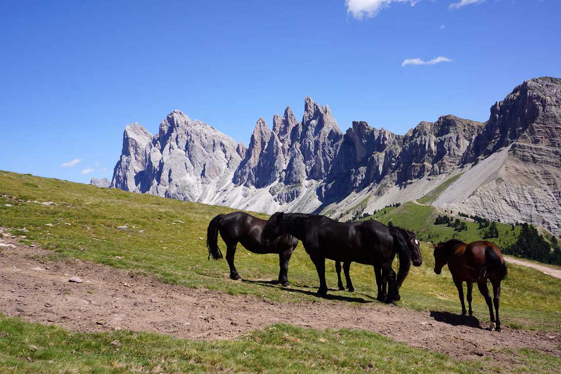 Horses - Mountain bike Route Rasciesa Brogles