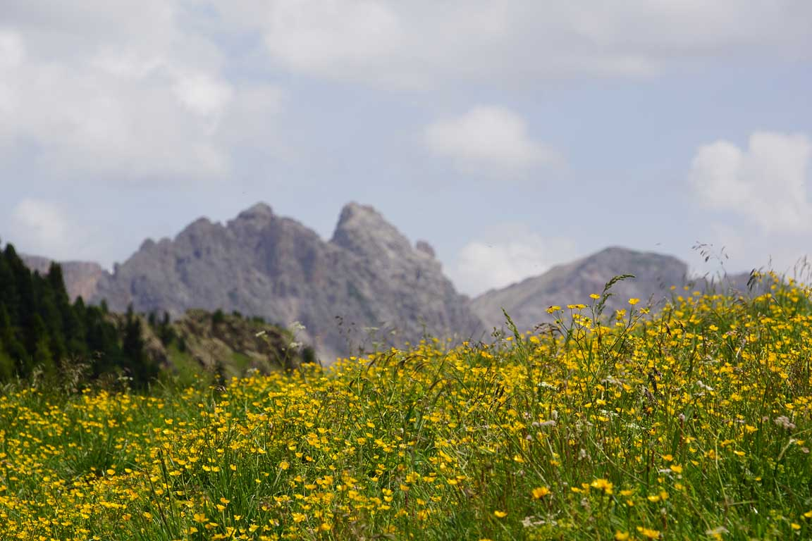 Hiking Holidays in South Tyrol - Le Odle mountain range